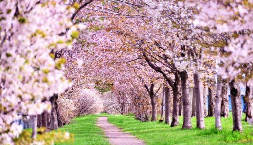 「桜を見る会」どうでもいい?何が問題なの?【2019年】